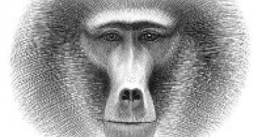 Petr Nikl - Opice